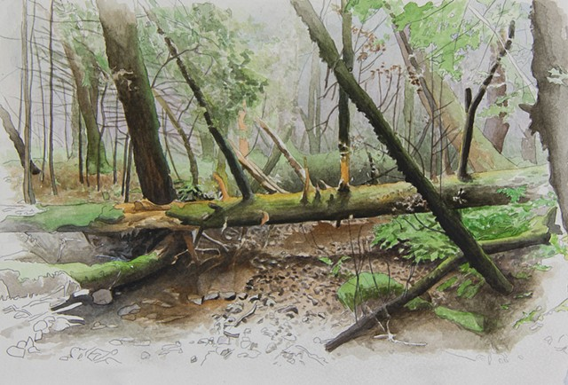 watercolor landscape of California forest