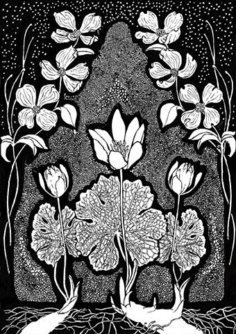 Botanical drawing of North Carolina Native Plants Bloodroot and Flowering Dogwood, For Penland School of Crafts
