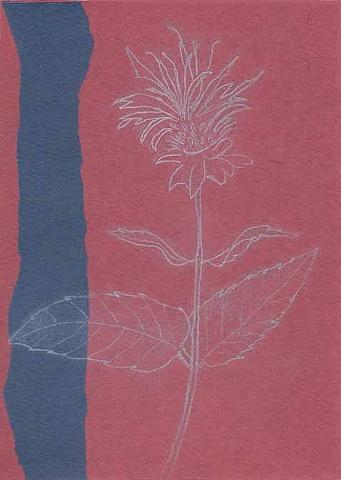 Monarda: Plum with Blue