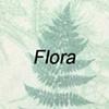 Monoprints-Flora