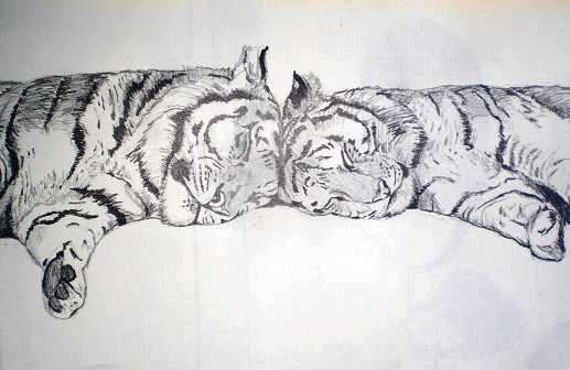 Lying Tigers Pencil Drawing