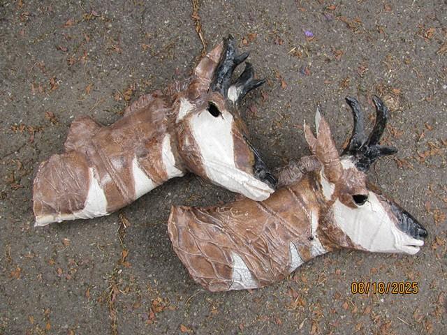 Crossing: Two Pronghorn Bucks