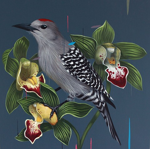 Gila Woodpecker and Cymbidium