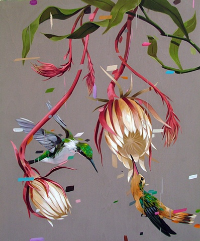 epiphyllum and humingbirds