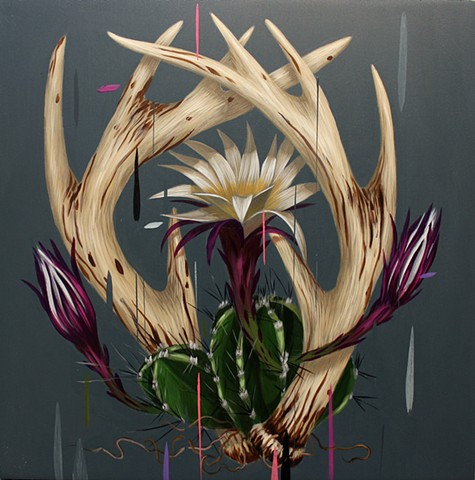 Echinopsis and Antlers