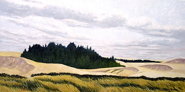 An Island of trees in the sand dunes on the West Coast near Reedsport Oregon