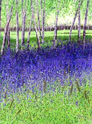 A beautiful area of almost solid Big Blue Camas blooms.