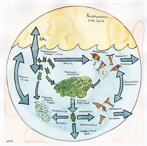 Phytoplankton Diagram (for Slow Factory)