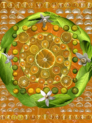 orange mandala flowers fruit leaves slices