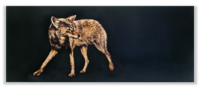 Image of coyote looking back.