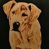Sally Dog