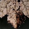 Harbinger--Detail