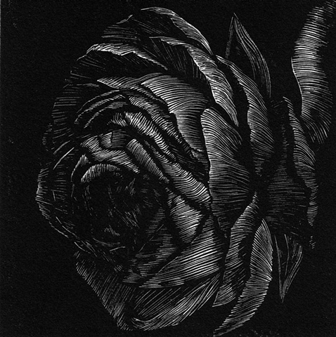a relief engraving of a ranunculus flower