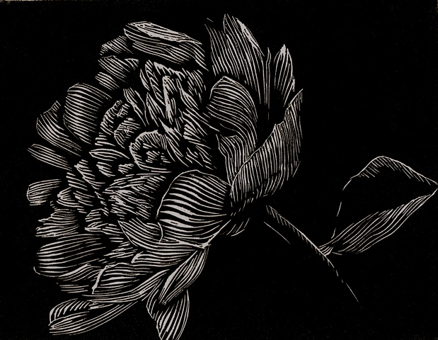 a relief engraving of a peony flower