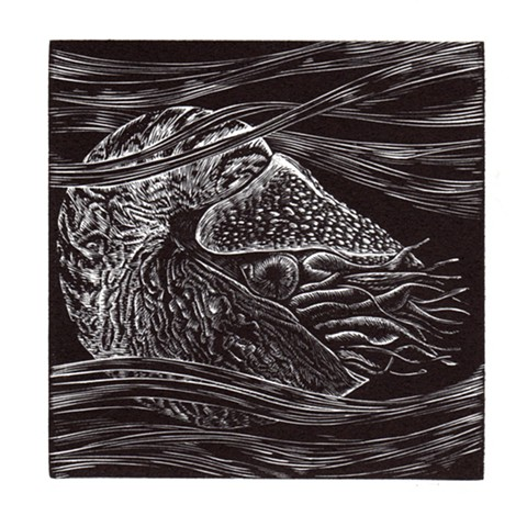 This is a wood engraving print of a nautilus in black and white printmaking