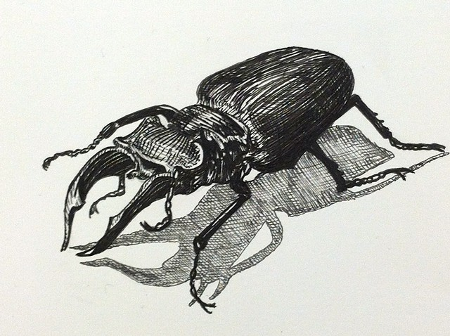a pen and ink black and white drawing of a stag beetle bug creepy spofford press crosshatching