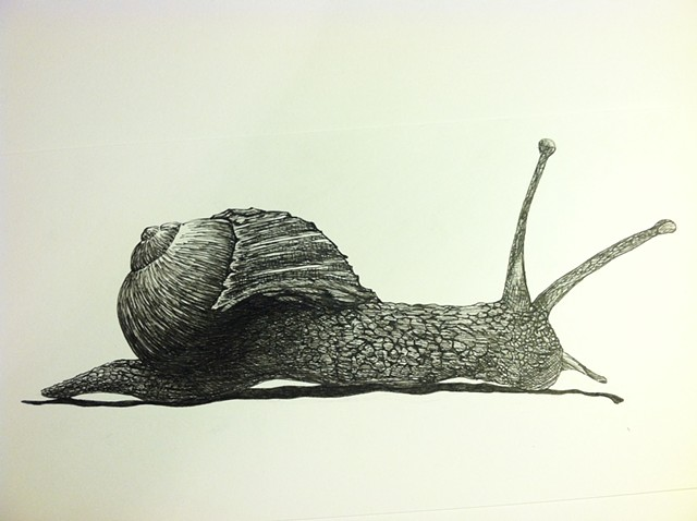 a pen and ink black and white drawing of a cute little snail slime slug with a twee indie emo  hipster spofford press crosshatching