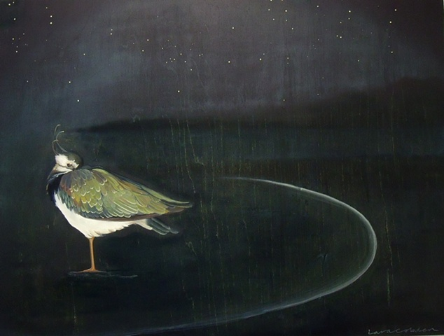 Lapwing  -  Far from Home  SOLD
