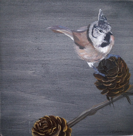 Tufted Tit & Pine Cones   SOLD