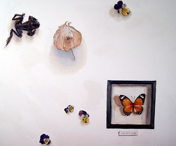 Dried Frog, Lantern, Heartsease and another pinned Butterfly