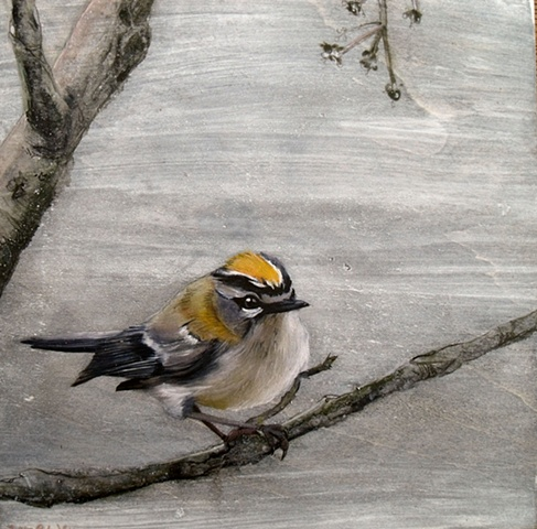 Goldcrest ll  SOLD