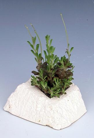 styrofoam white matte