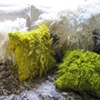 Wool felt pillows