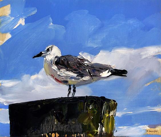 "'Seagull. Morehead City, NC'  12""x14"" Oil on wood."