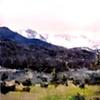 "Colorado. Estes Park   16""x20"" Oil on wood NFS (Nine Dot Arts)"