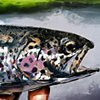 """'Rainbow Trout' 30""""x40"""" Oil on wood. Commission painting for Trekka Outfitters. Fly shop in Chattanooga, Tennessee."""