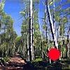 "'Aspen Forest. Telluride, CO' 48""x64"" Oil on wood"