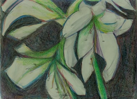amaryllis white floral expressionist