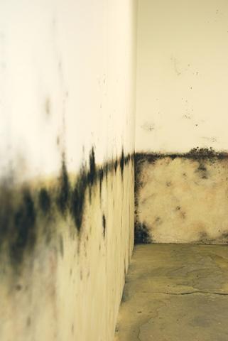 Jasmyne Graybill Floodline Acrylic paint, charcoal, pastel 9� x 7� Installation