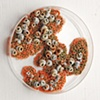 Jasmyne Graybill