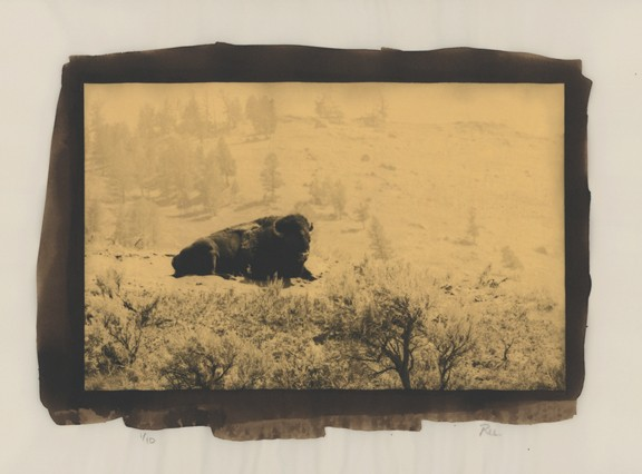 """Lone Bison"" Edition 1/10"