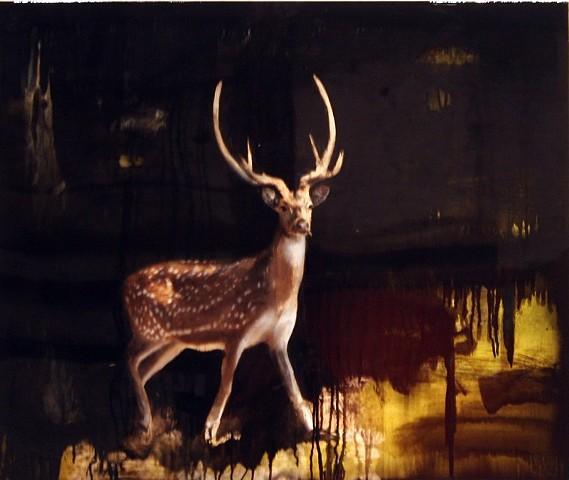 """""""Spotted Deer"""""""