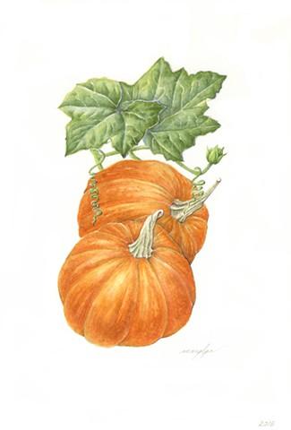 Pumpkin/Cucurbita maxima