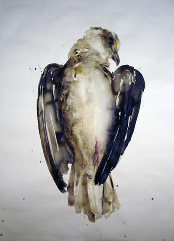 Urban Bird no. 9