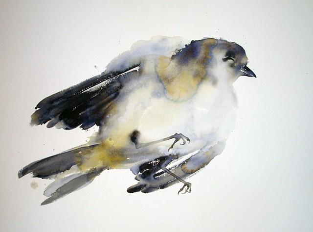 Julie's Bird