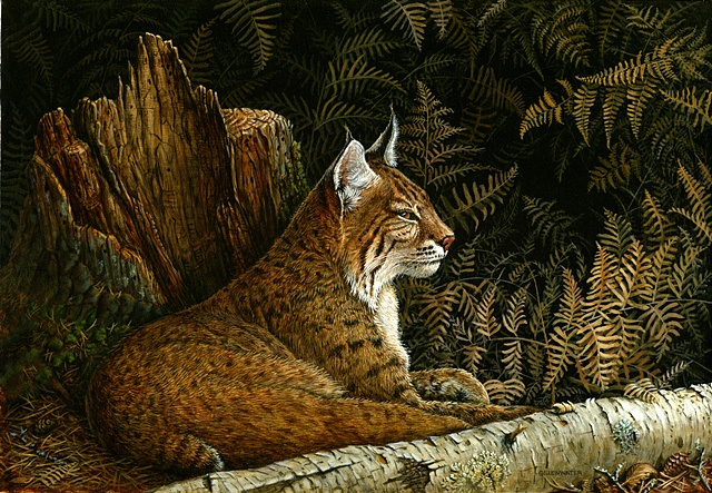 A bobcat rests against a backdrop of autumn bracken.