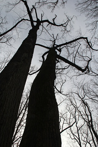 Giant hardwoods loom above Rock Creek National Park, Maryland.