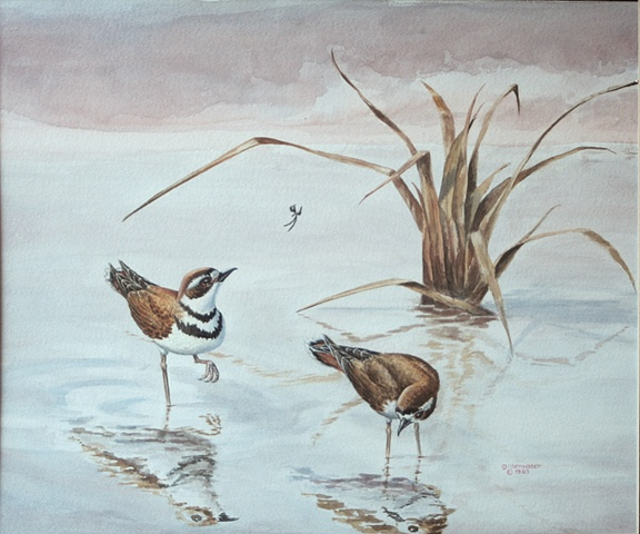 A pair of Killdeer explore a marshy slough
