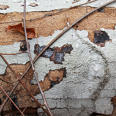 Geometric patterns of decay on the forest floor in Rock Creek Park National Maryland.