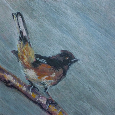 oil painting rufous-sided towhee bird