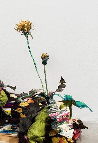Weeds: Dandelion