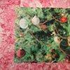 Current Exhibition:  Michael Gaughan, Fluorescent Glaucoma in a Christmas Terrarium