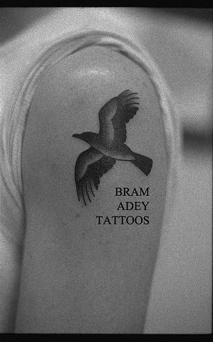 Crow - Bram Adey - 2015