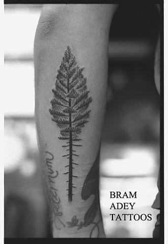 Evergreen - Bram Adey - 2015