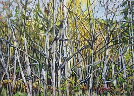 Backlit Birches Study