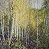 Backlit Birches
